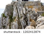 the famous apes of gibraltar ... | Shutterstock . vector #1202412874