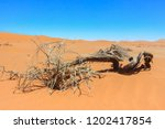 dead tree on the territory of... | Shutterstock . vector #1202417854