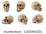 Six Plastic Human Skulls With...