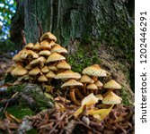 a group of shaggy scalycap at...   Shutterstock . vector #1202446291