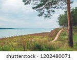 a footpath in a forest by the...   Shutterstock . vector #1202480071