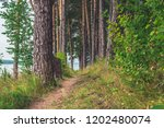 a footpath in a forest in... | Shutterstock . vector #1202480074