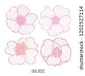 decorative dog rose flowers ... | Shutterstock .eps vector #1202527114