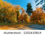 beautiful and romantic fall...   Shutterstock . vector #1202610814