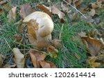 view of autumn mushrooms ... | Shutterstock . vector #1202614414
