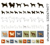 dog breeds flat icons in set...   Shutterstock .eps vector #1202674477