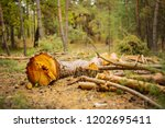 closeup pine tree lie in a... | Shutterstock . vector #1202695411