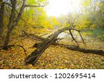 dry quiet autumn forest | Shutterstock . vector #1202695414