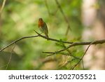 robin sitting on a branch in... | Shutterstock . vector #1202705521