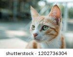 portrait of poor red homeless... | Shutterstock . vector #1202736304