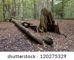 a fallen dead tree in the woods.