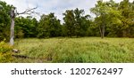 panorama with old broken tree   Shutterstock . vector #1202762497