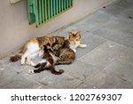 Street Cat Sucking Her Two...