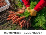 happy women farmers dig up and...   Shutterstock . vector #1202783017