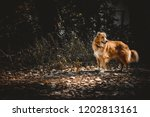 cur dog deep in the woods  | Shutterstock . vector #1202813161