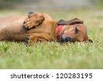 Stock photo dog played enough to sleep 120283195