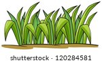 illustration of a grass on a... | Shutterstock .eps vector #120284581
