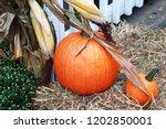 Bright Orange Pumpkin On A...