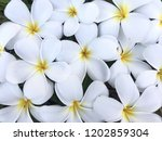 white flowers on the ground ... | Shutterstock . vector #1202859304