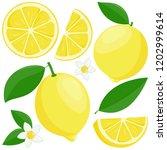 whole and sliced lemon fruit ... | Shutterstock .eps vector #1202999614