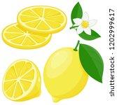 whole and half sliced lemon...   Shutterstock .eps vector #1202999617