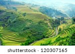 rice filed of terraces   ... | Shutterstock . vector #120307165