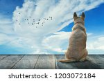 light brown dog is waiting for... | Shutterstock . vector #1203072184