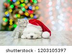 Stock photo kitten with sleepy white fluffy samoyed puppy in red santa hat on a background of the christmas 1203105397