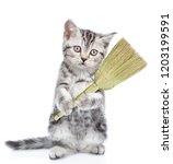cleaning concept. cat holds... | Shutterstock . vector #1203199591
