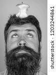 man handsome hipster long beard ...   Shutterstock . vector #1203244861