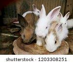 Stock photo baby rabbits in farm thailand phrae 1203308251