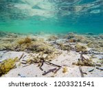 underwater view of sandy seabed ... | Shutterstock . vector #1203321541