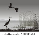 vector illustration silhouettes ... | Shutterstock .eps vector #120335581