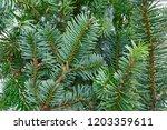 christmas real fir tree leaves... | Shutterstock . vector #1203359611
