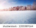 beautiful trees in winter... | Shutterstock . vector #1203389164