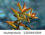 beautiful green succulent pant... | Shutterstock . vector #1203441004