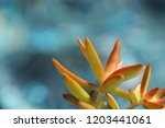 beautiful green succulent pant... | Shutterstock . vector #1203441061