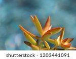 beautiful green succulent pant... | Shutterstock . vector #1203441091