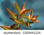 beautiful green succulent pant... | Shutterstock . vector #1203441124