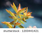 beautiful green succulent pant... | Shutterstock . vector #1203441421
