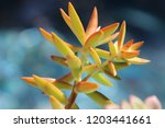 beautiful green succulent pant... | Shutterstock . vector #1203441661
