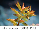 beautiful green succulent pant... | Shutterstock . vector #1203441904