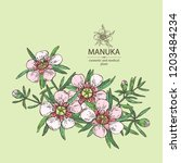 manuka  leaves and flowers of... | Shutterstock .eps vector #1203484234