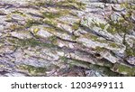 tree bark texture background. | Shutterstock . vector #1203499111