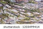 tree bark texture background. | Shutterstock . vector #1203499414