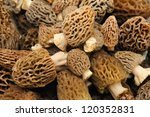 Morel\'s Are Distinctive...