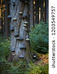 the boreal owl  aegolius... | Shutterstock . vector #1203549757