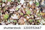 dry autumn leaves background | Shutterstock . vector #1203552667
