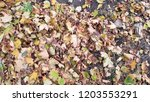 dry autumn leaves background | Shutterstock . vector #1203553291