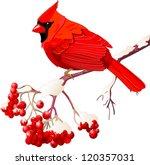 Red Cardinal Bird Sitting On...
